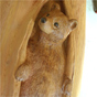 Bear in the hole woodcarving