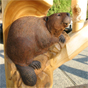 Beaver woodcarving
